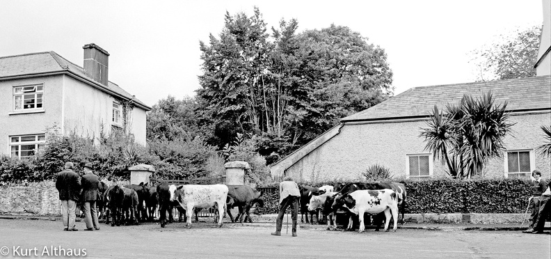 Kennmare Kerry Market 1978 57 16